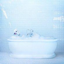 NYの宅録ガール Frankie Cosmos がUSインディーの名門 Sub Pop からニューアルバム『Vessel』をリリース!