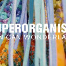 Superorganism が The Current の MicroShow に出演したライブ映像が公開!
