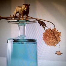 Beirut が5作目となるニューアルバム『Gallipoli』を 4AD から 2/1 リリース!
