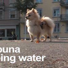 ドイツのエレクトロポップ・バンド Lali Puna、5曲入りの新作EP『Being Water』を 3/1 リリース!