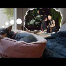 Green Day、ブロンディ「Dreaming」のカバー・シングルをリリース!